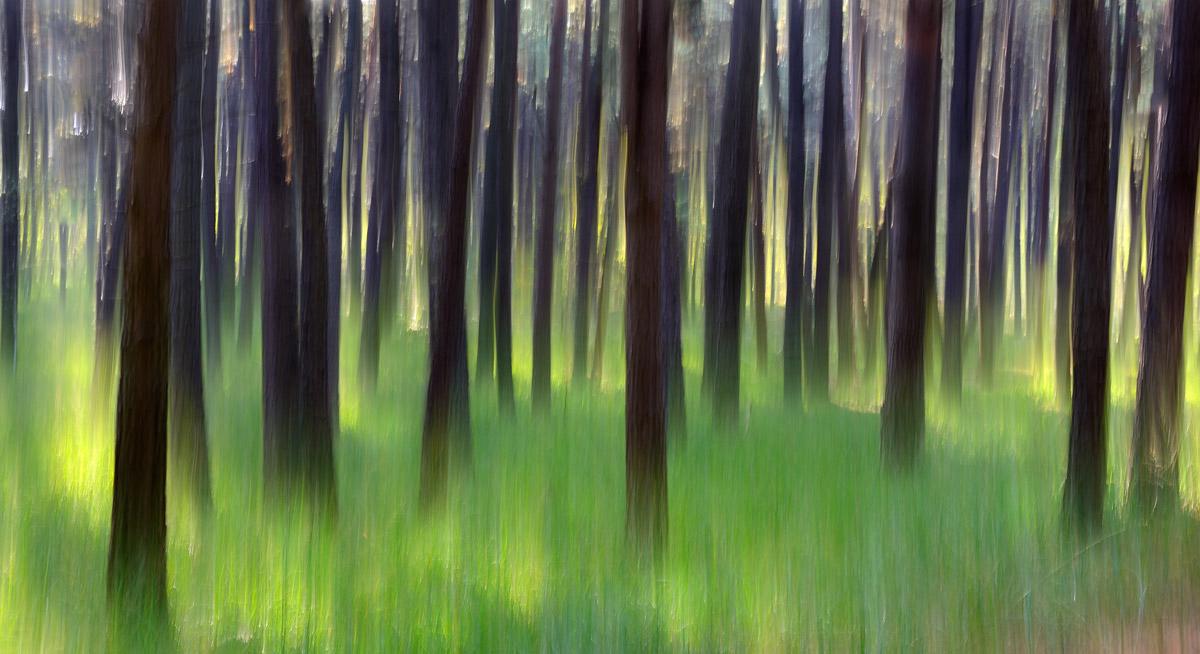 Lo spirito del bosco...
