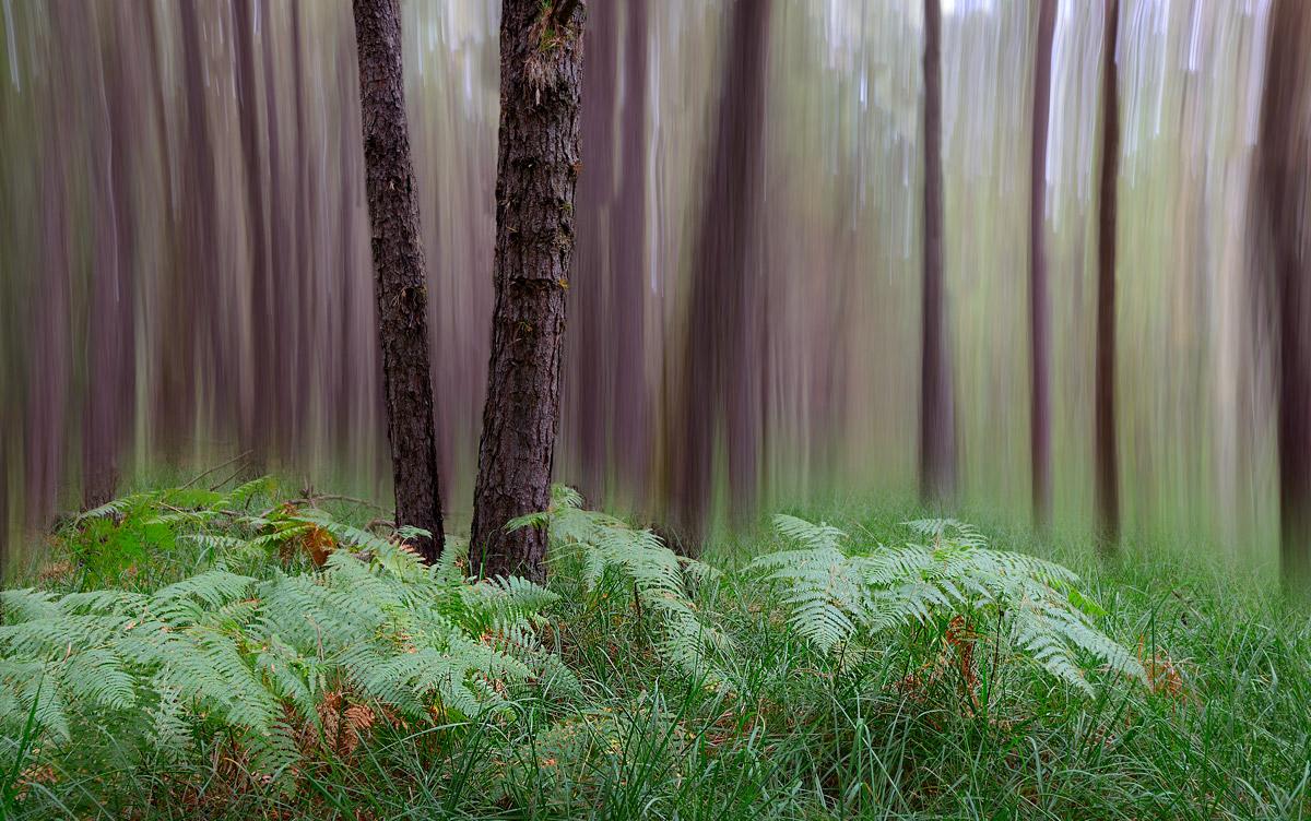 Lo spirito del bosco 2...