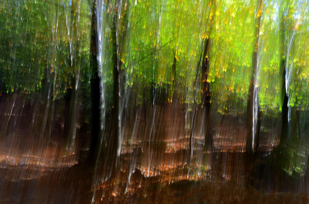 Lo spirito del bosco 3...