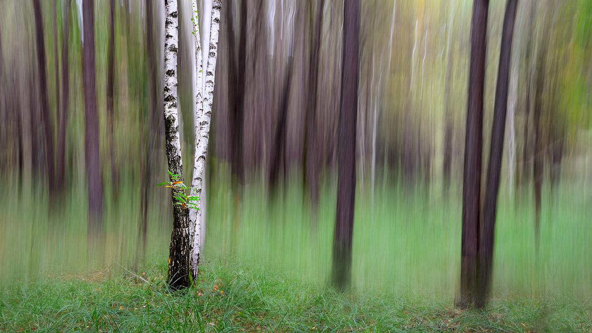 Lo spirito del bosco 4...