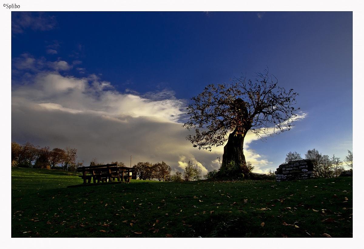 The chestnut trees St.Bernardo 3...