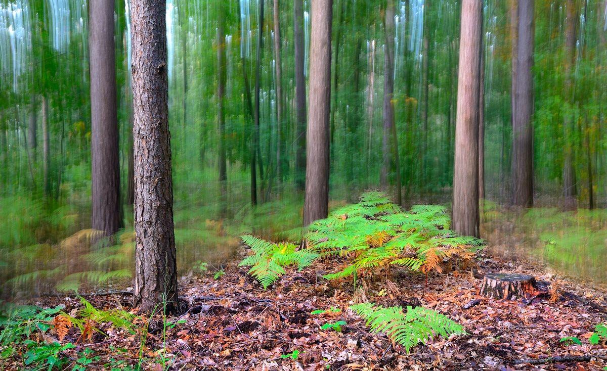 Lo spirito del bosco 5...