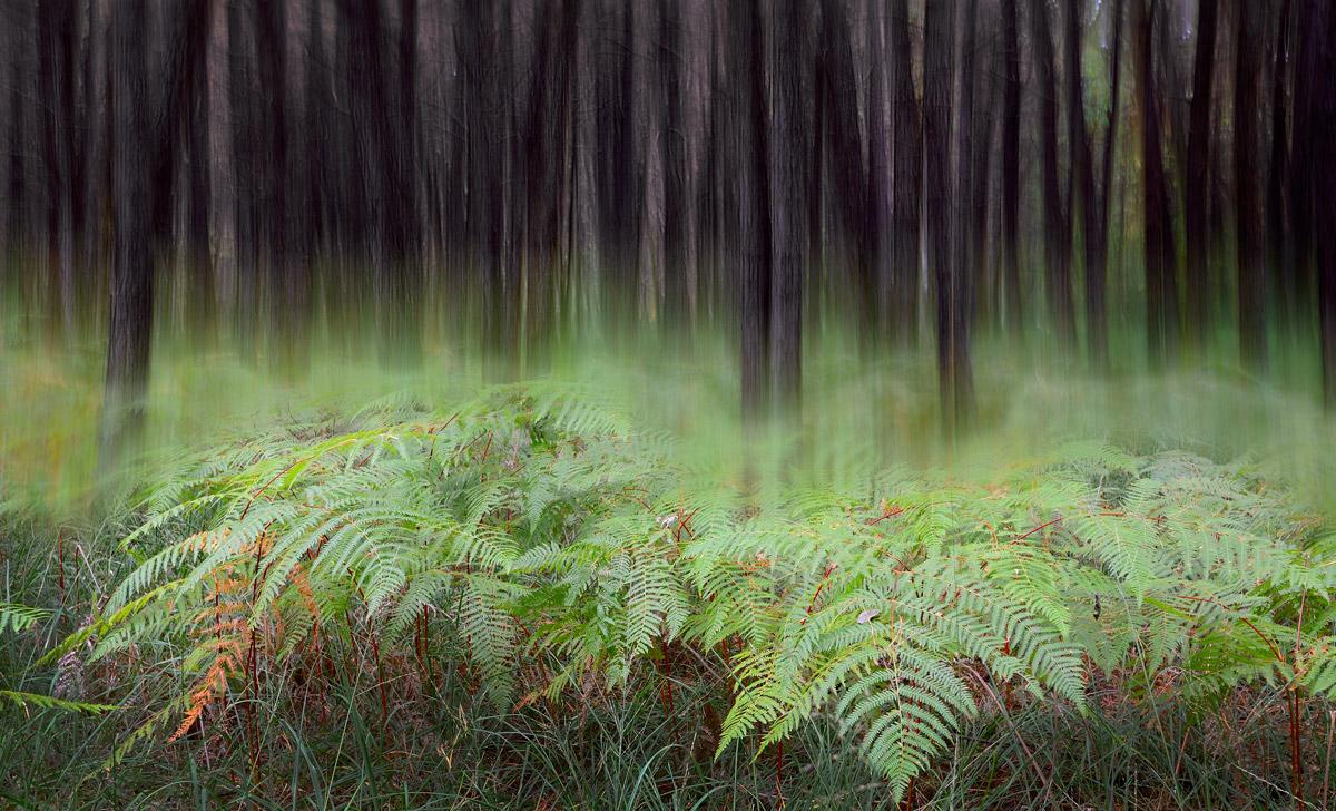 Lo spirito del bosco 6...