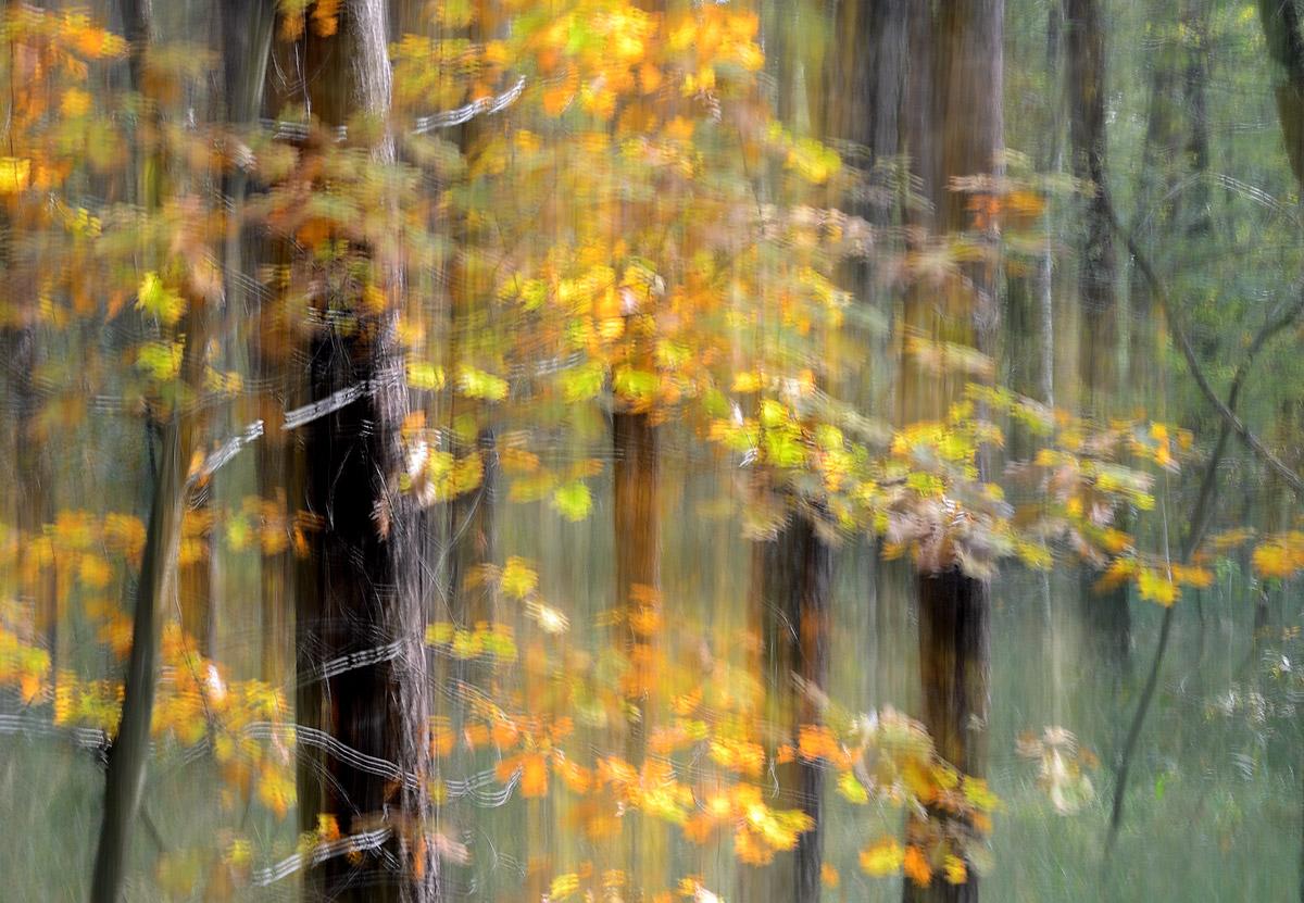 Lo spirito del bosco 7...