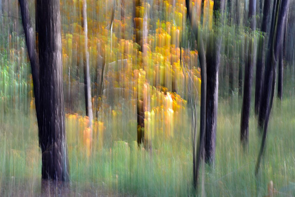 Lo spirito del bosco 8...