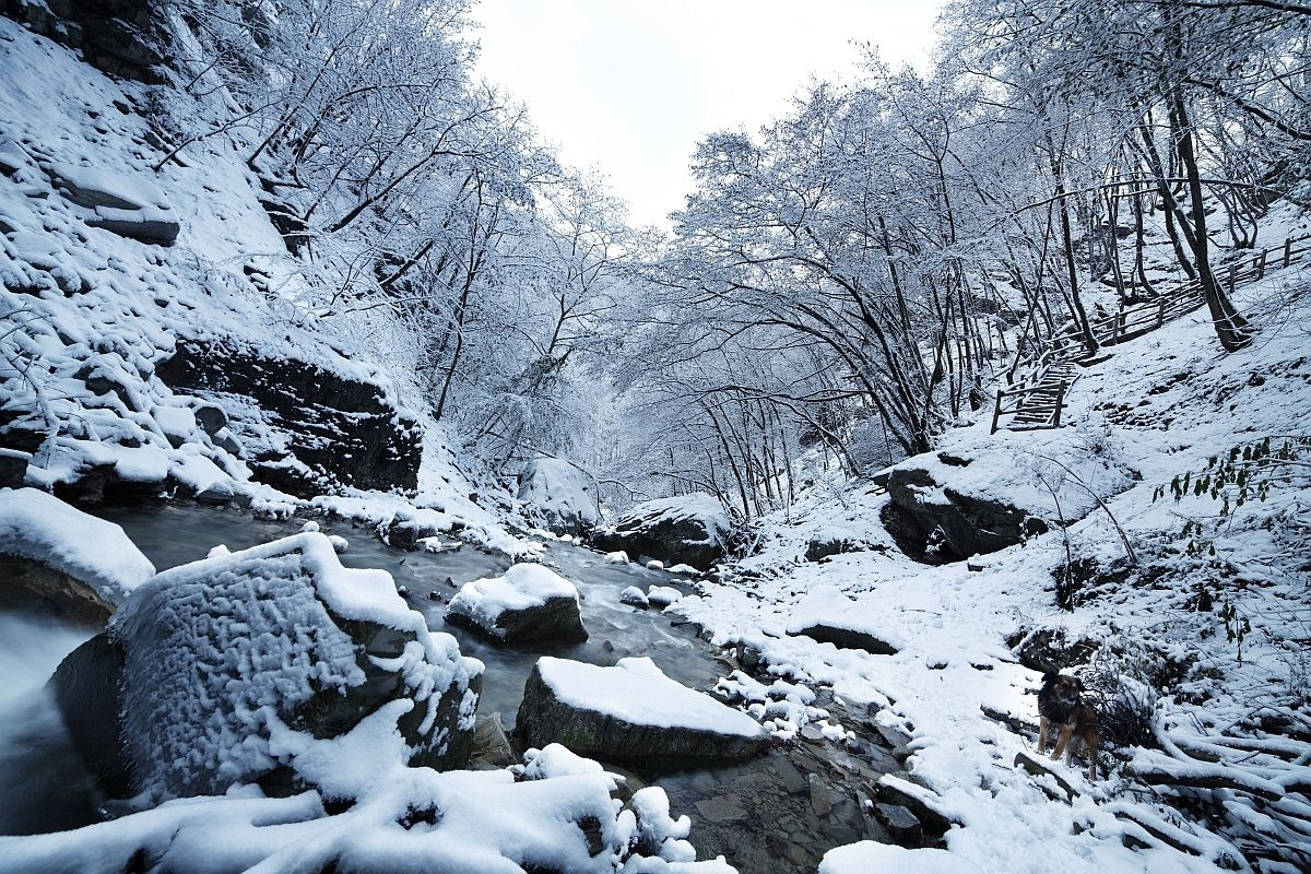 Perino stream and snowy forest...