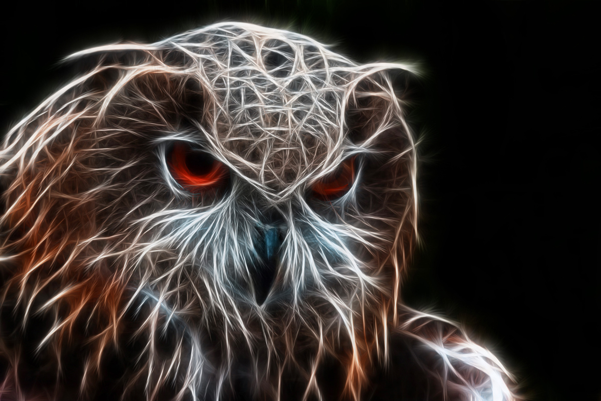 Electric Owl...