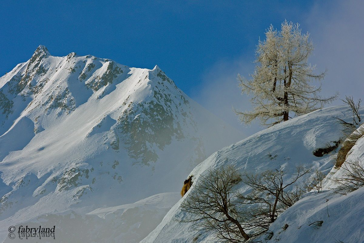 The larch and rime...