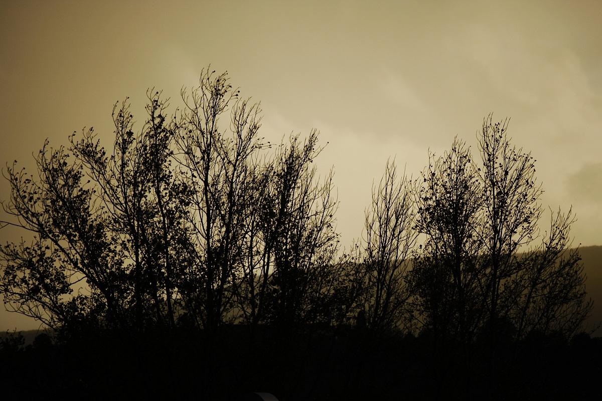 la silhouette della natura...