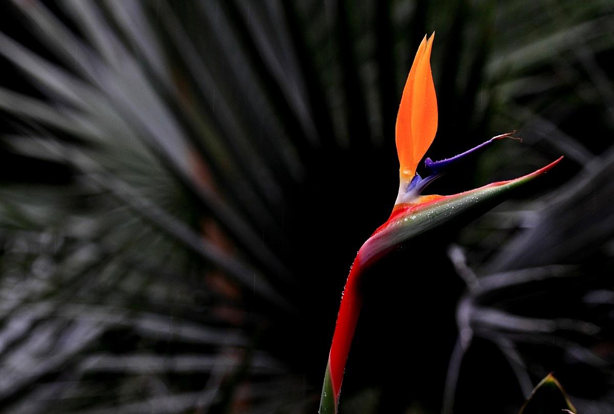A spout of flower...