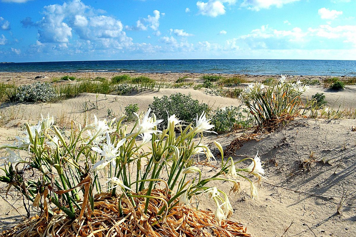 Salento coast...