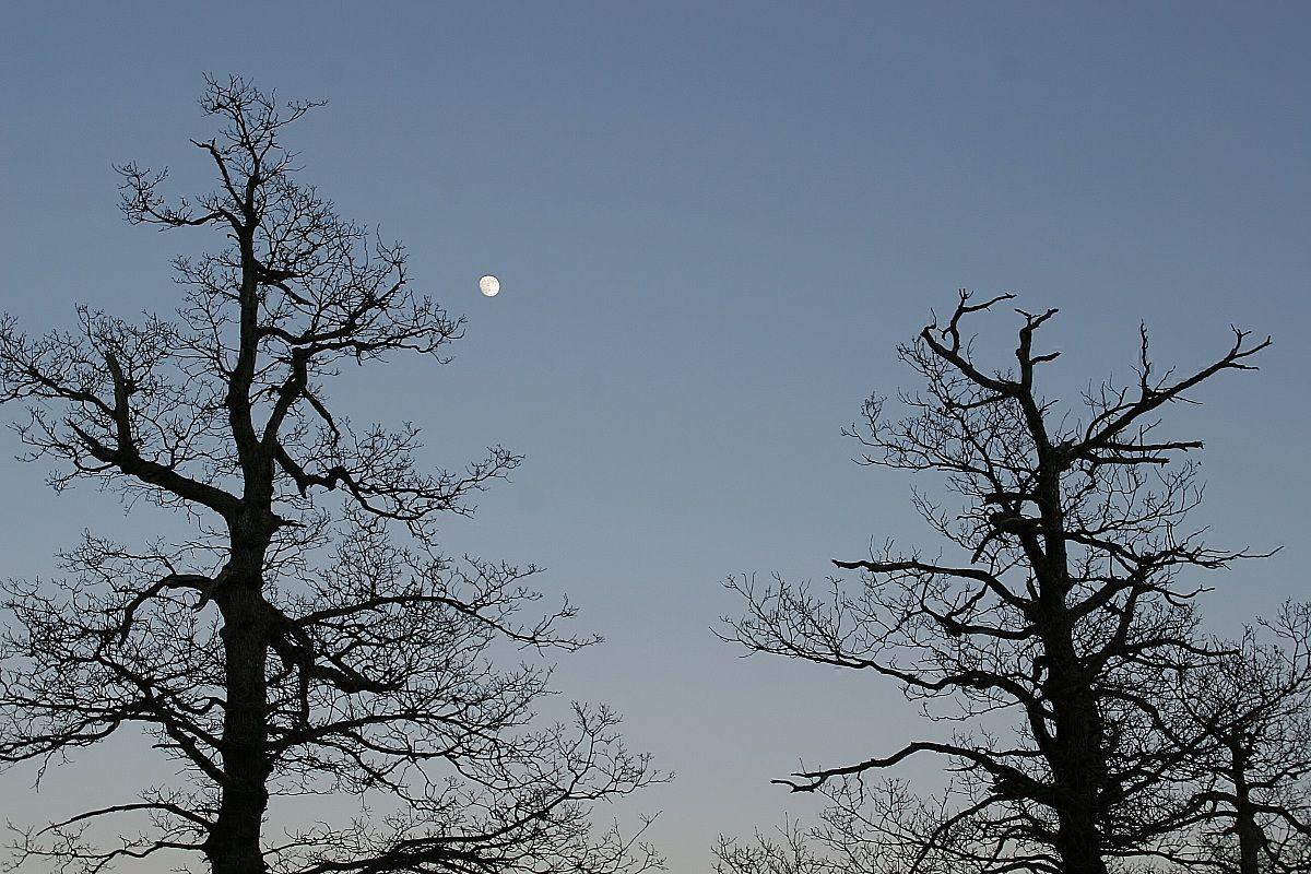 alberi che guardano la luna...
