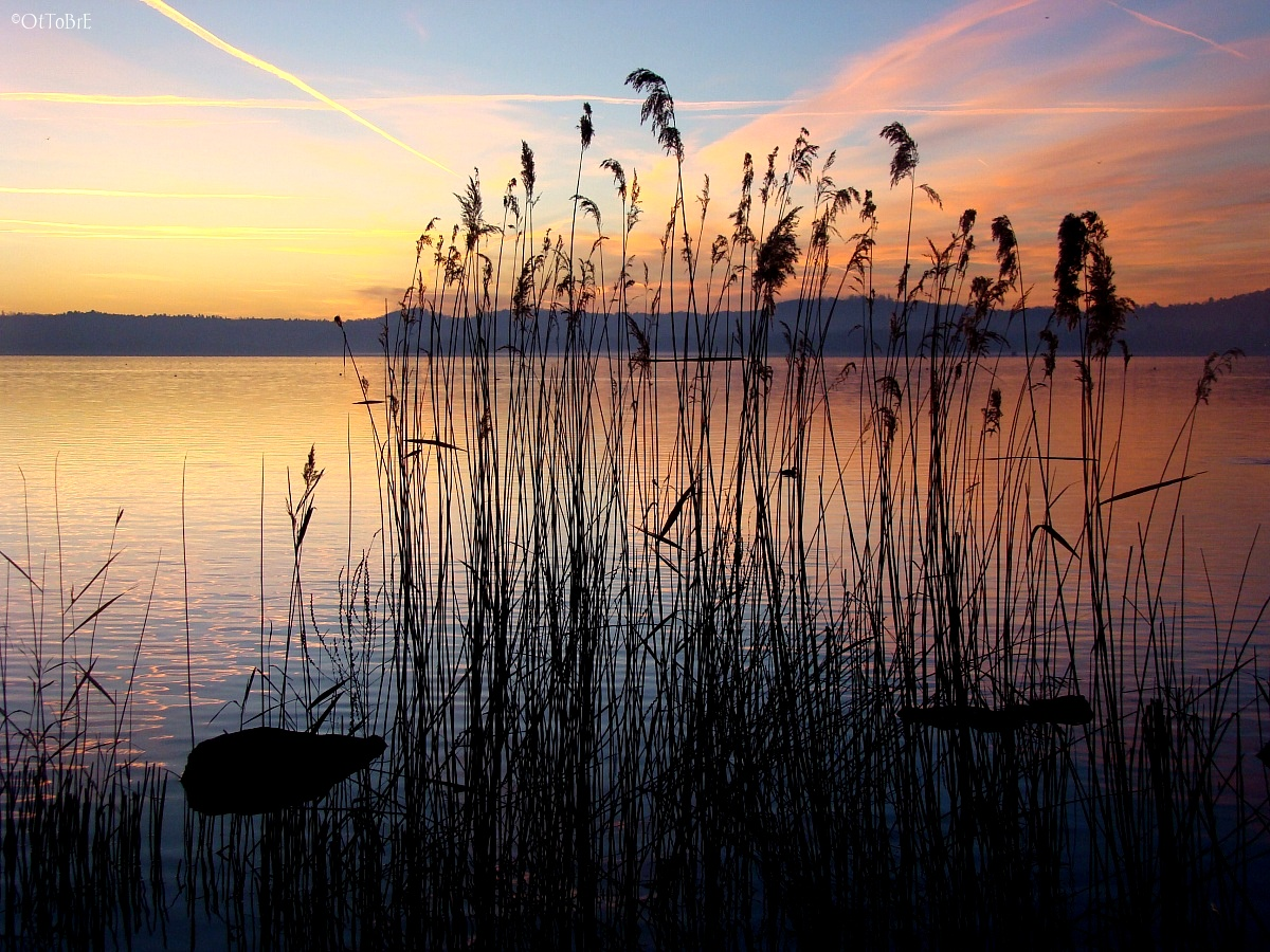 the silence of the reed...