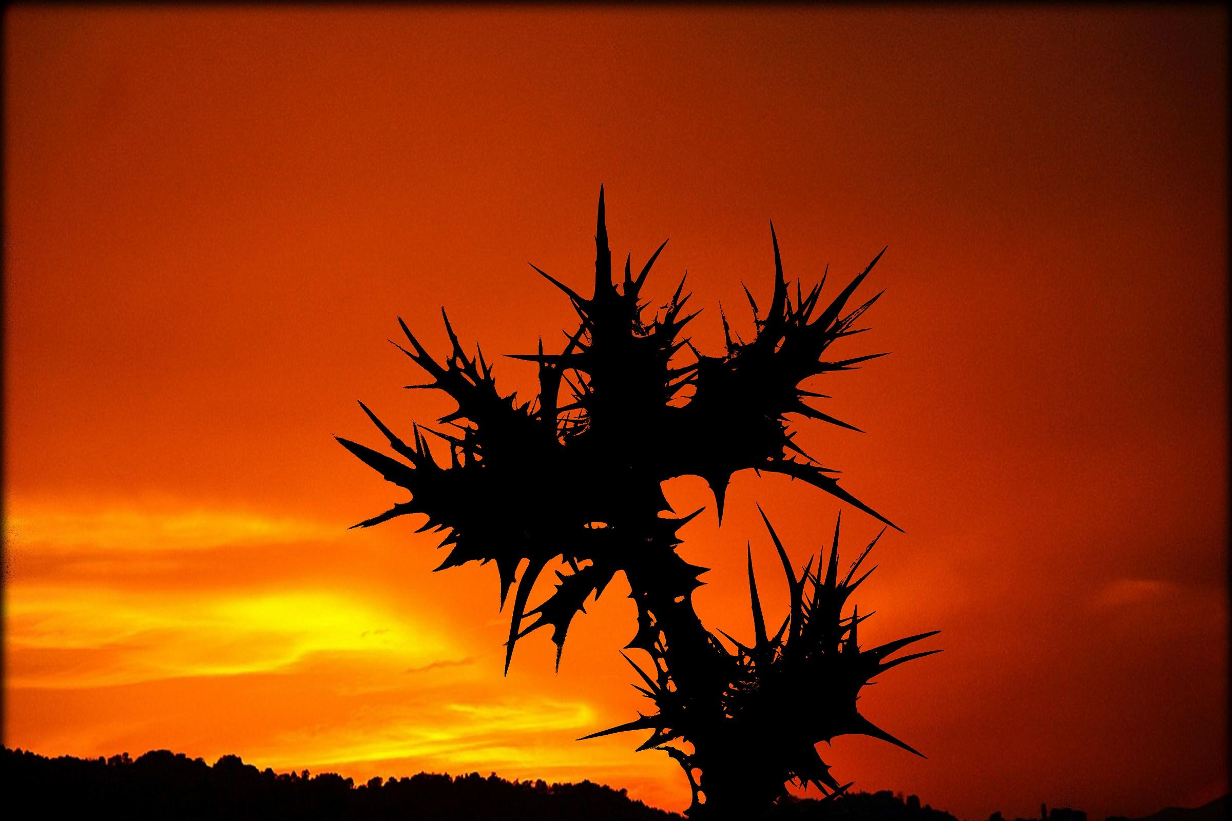 a particular sunset...