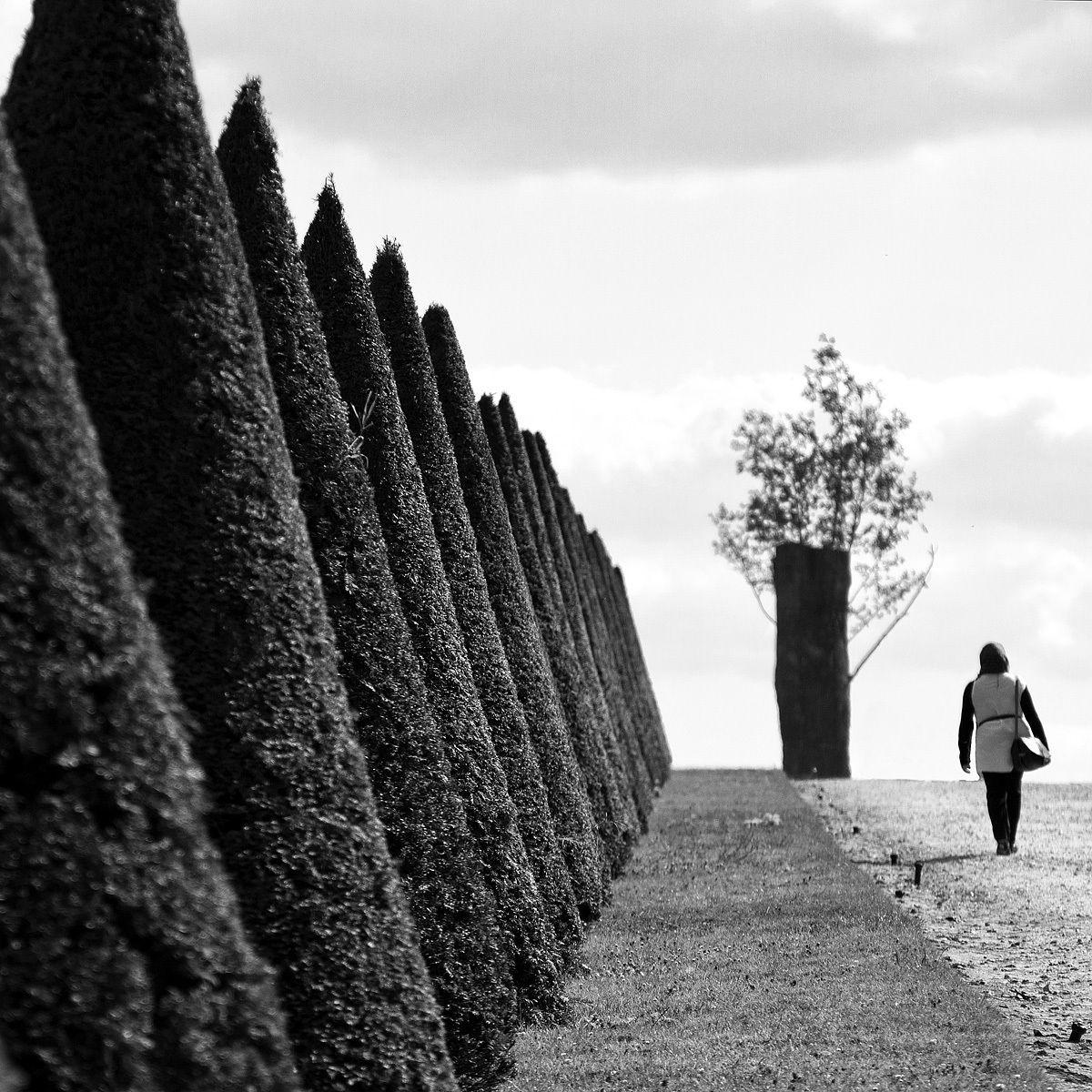 Walk Abstract...