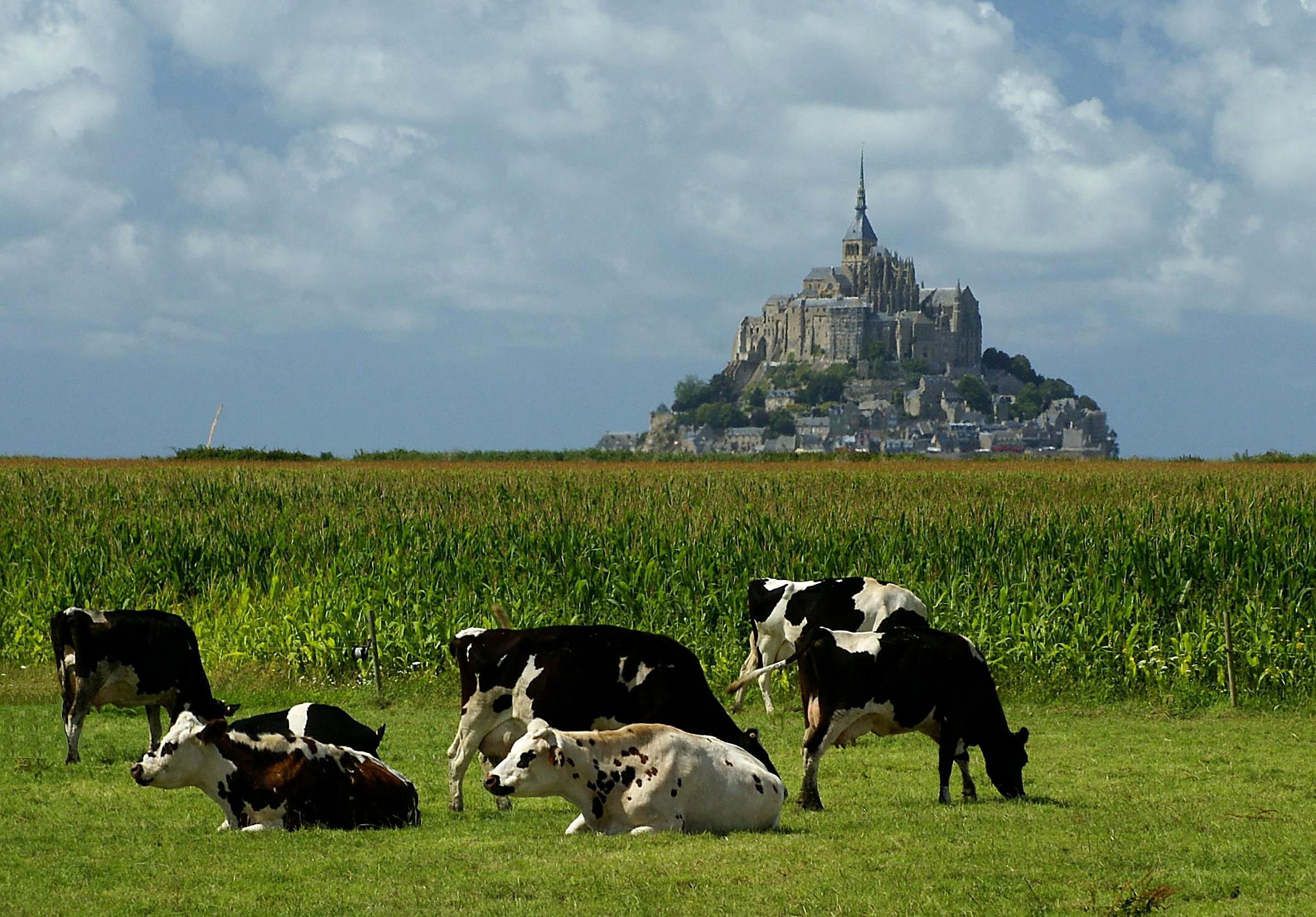 Le Mont ... et les vaches...