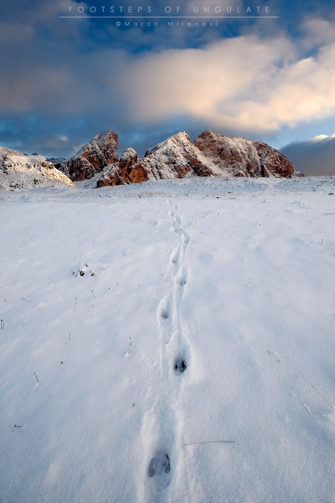 Footsteps of Hoofed...