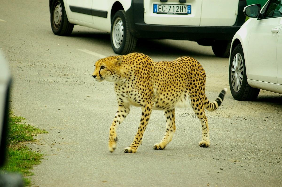 zoo safari...