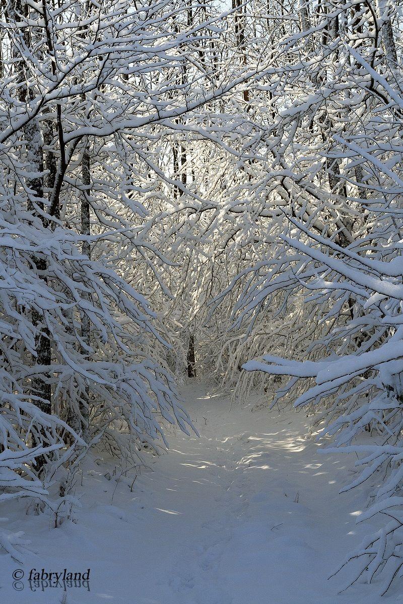 Towards Narnia...