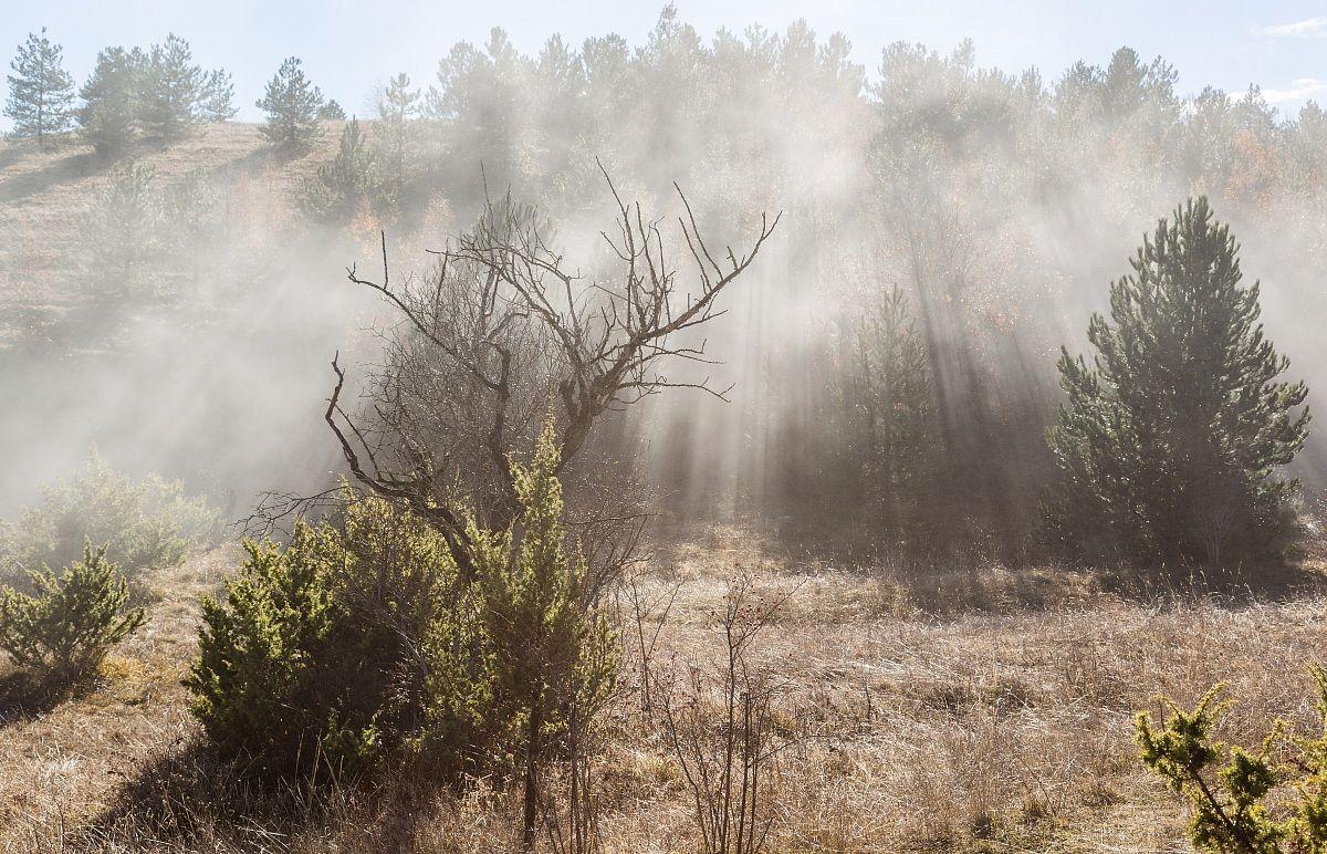The fog in the hills gl'irti ......