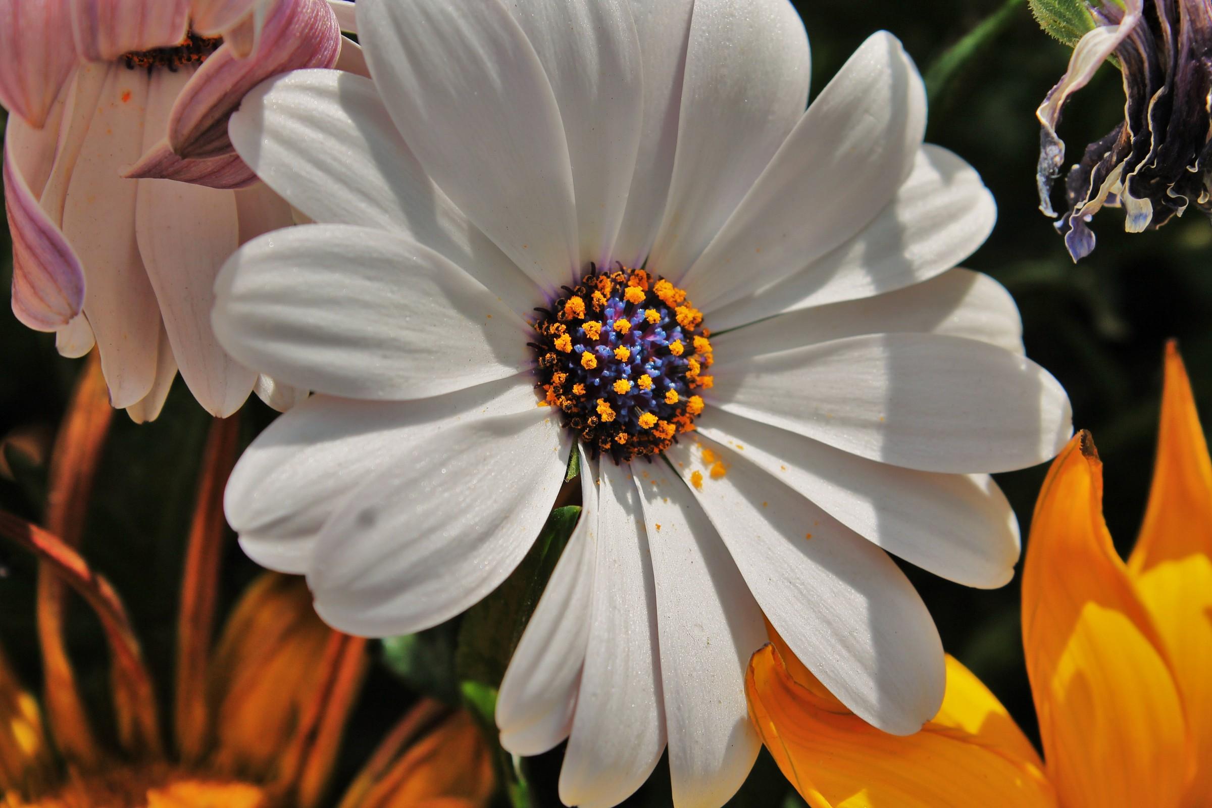 La bellezza di un fiore....