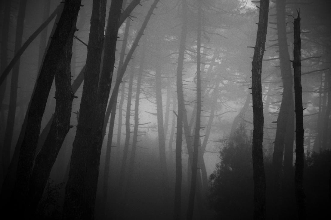 fog ......