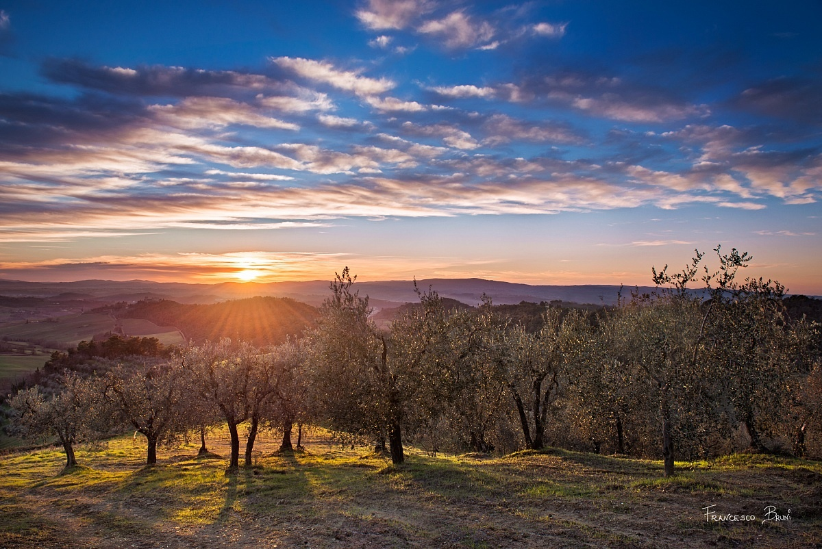 Sunset among the olive trees...