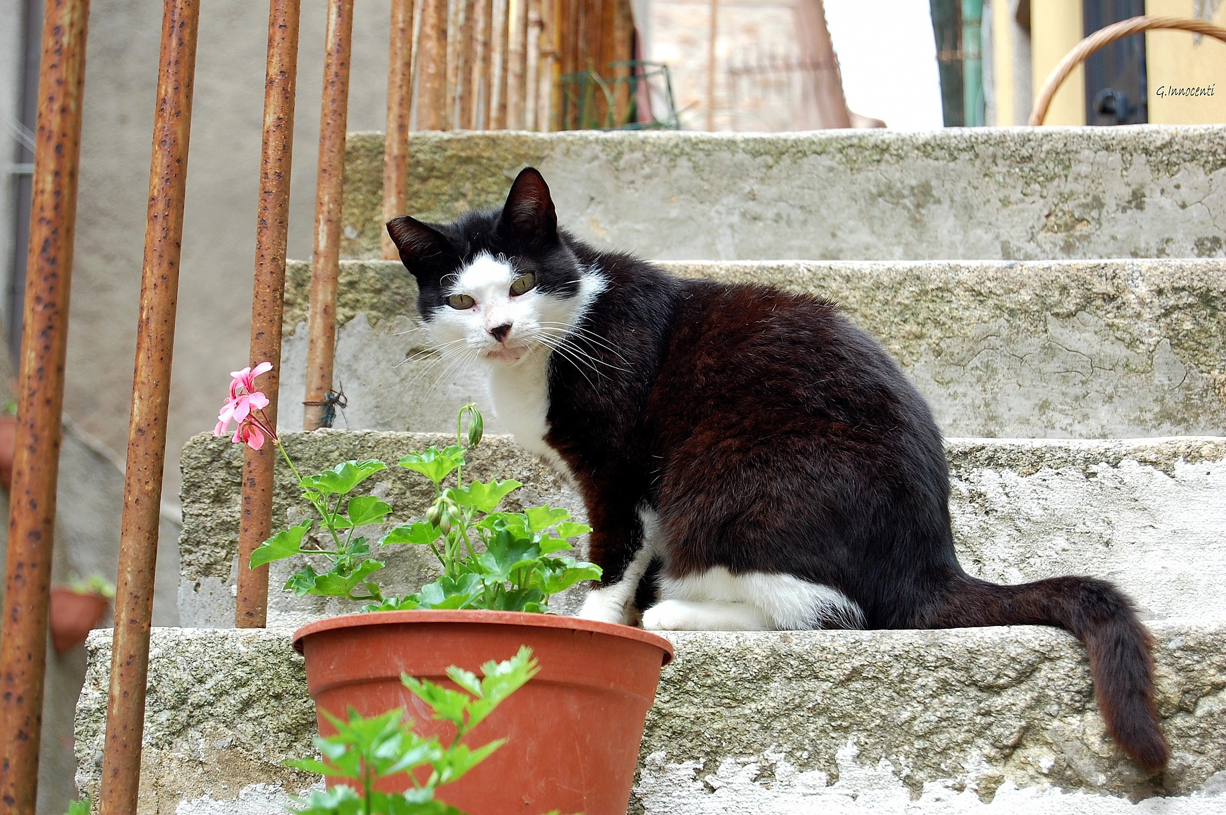 Sylvester the cat...