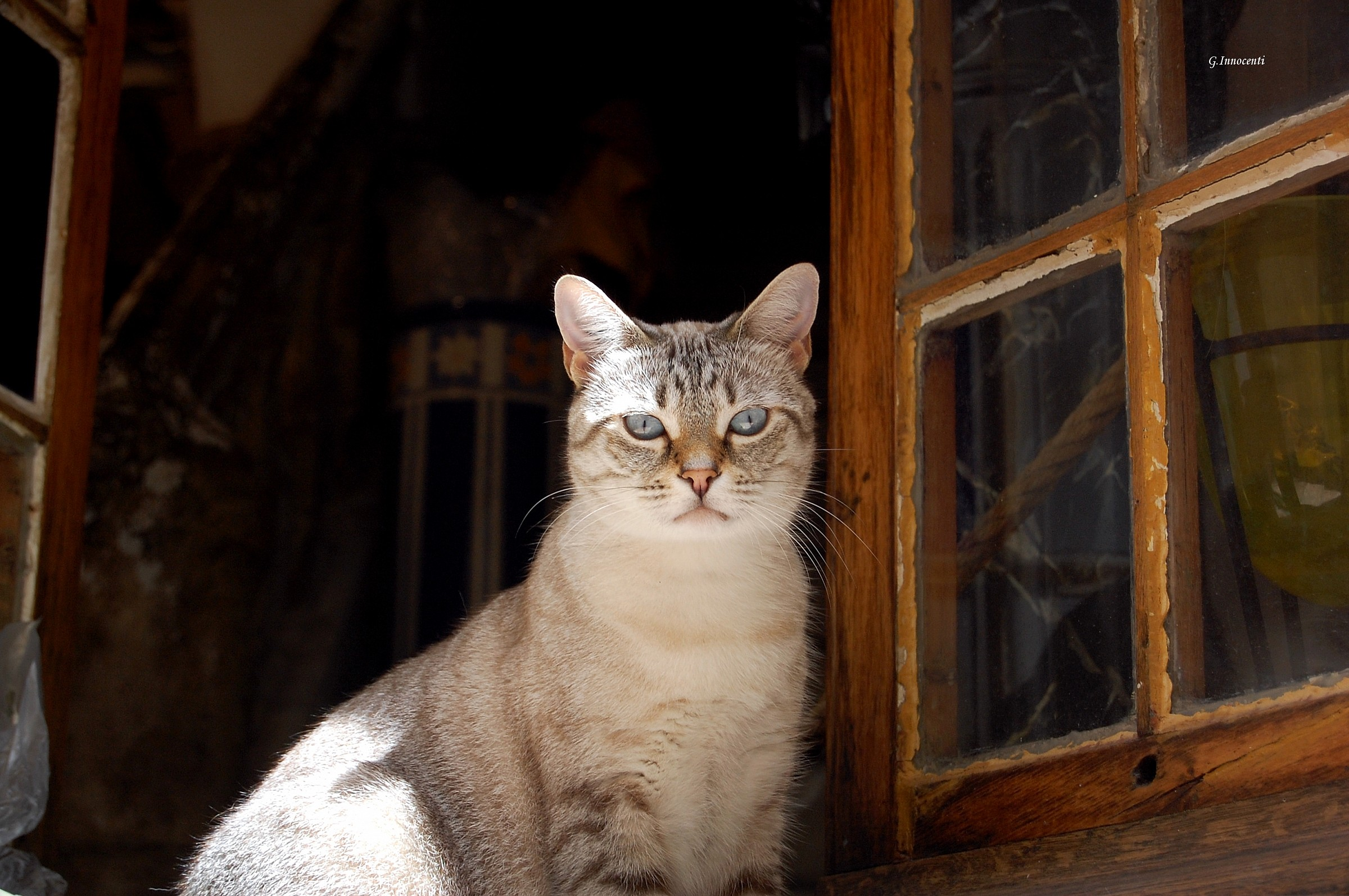 Cat at the window...