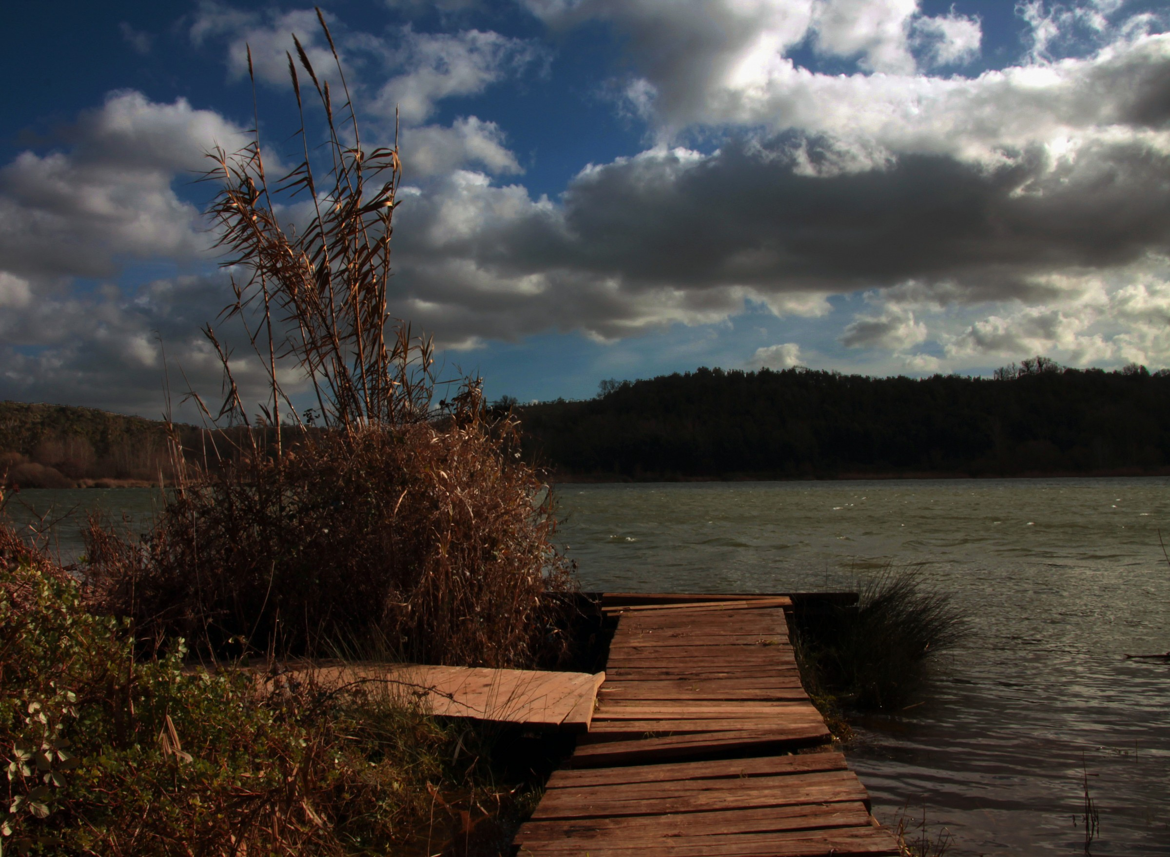 Dock on the pond...