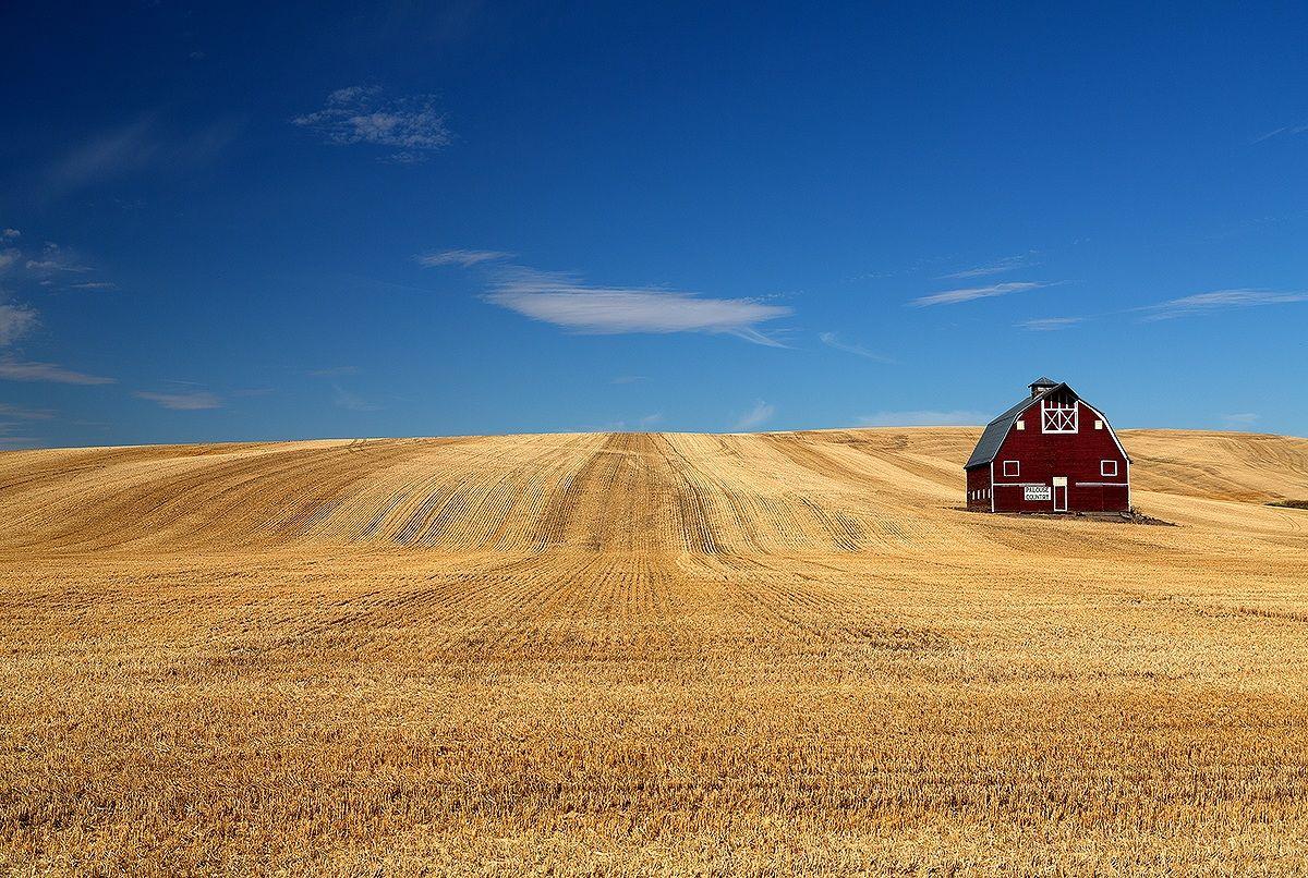 Wheat fields @ Palouse country...