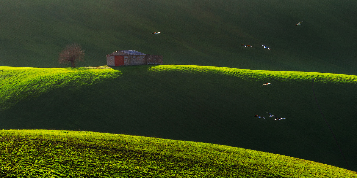 seagulls in the country...