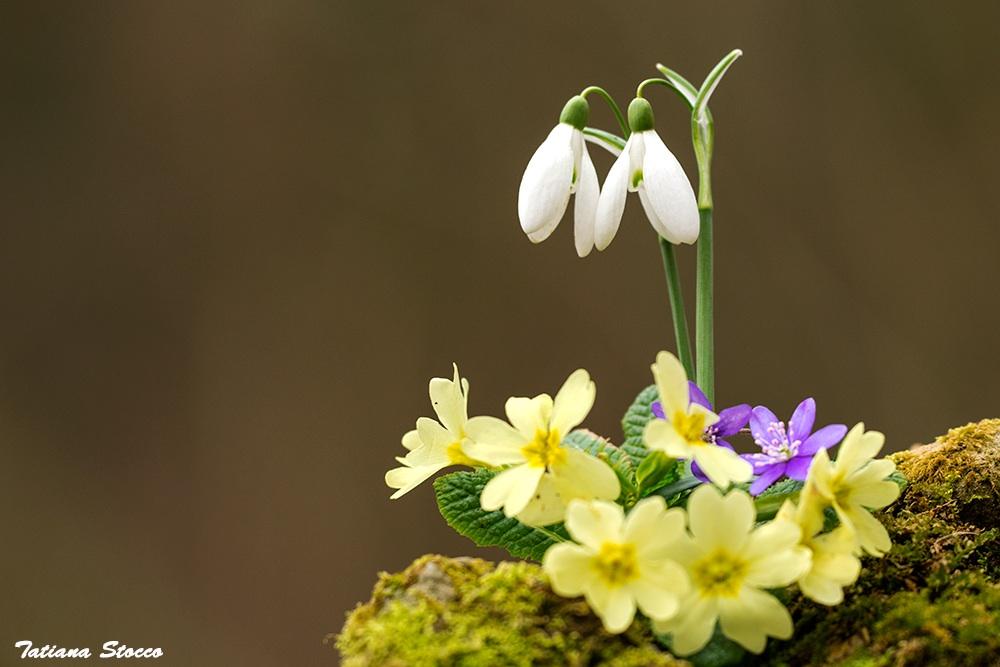 tripudio di primavera...
