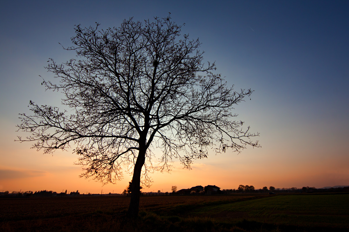 The tree in front of the Sun...