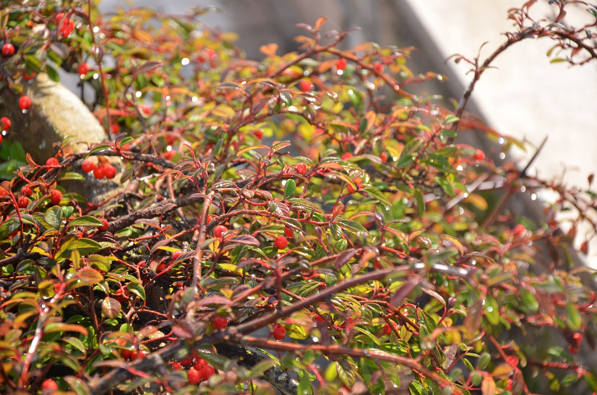 Berries...
