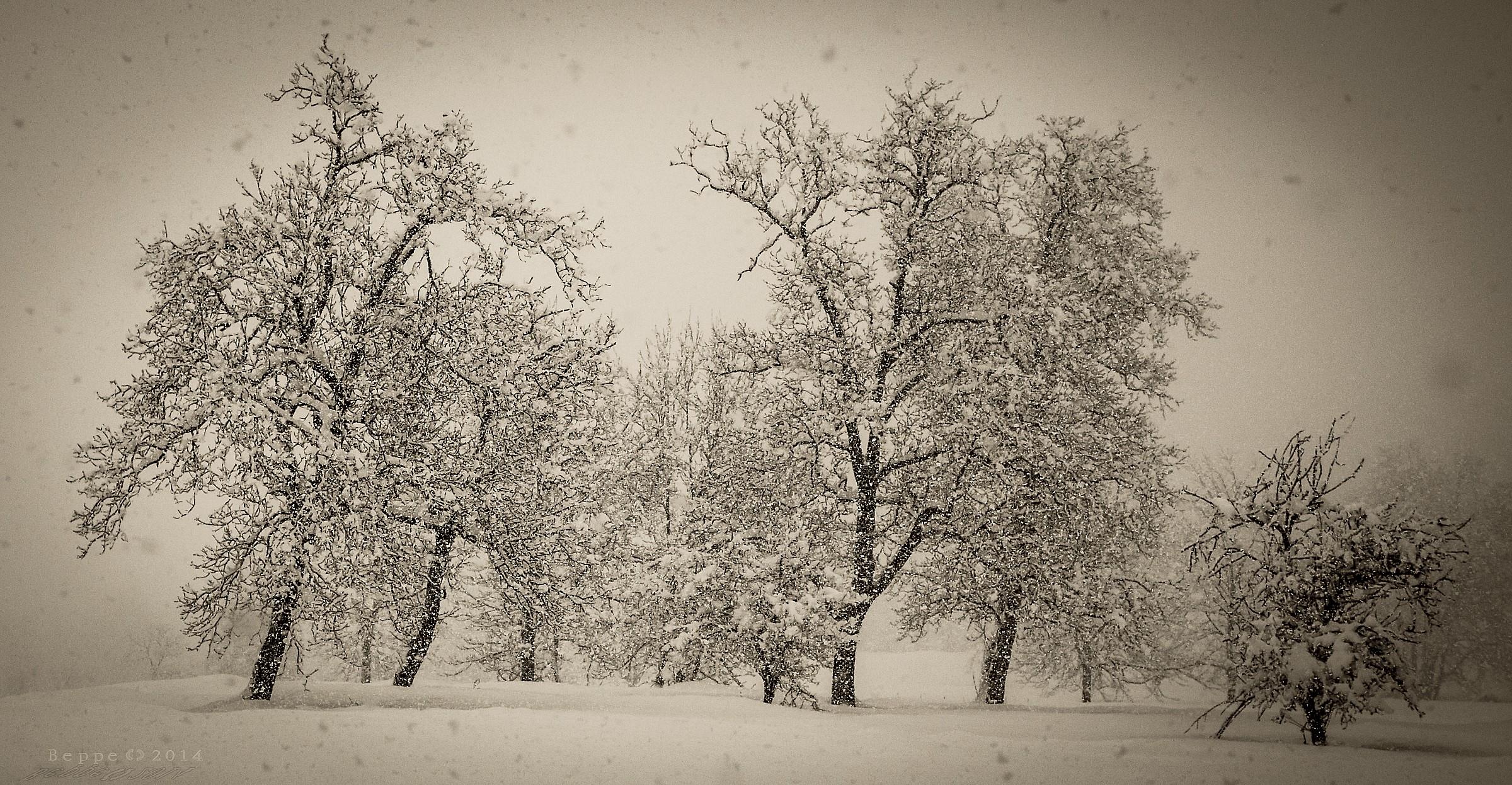 snow trees...