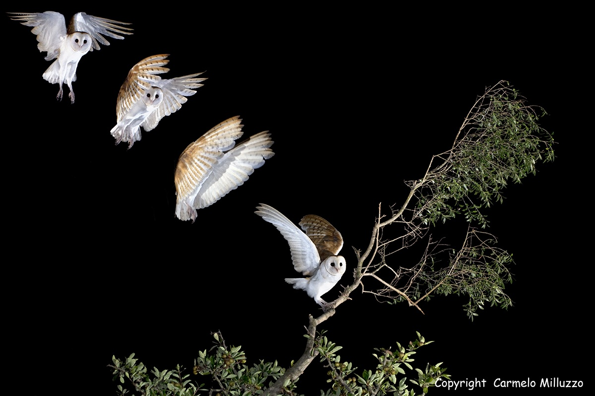 The Flight of the Barn...