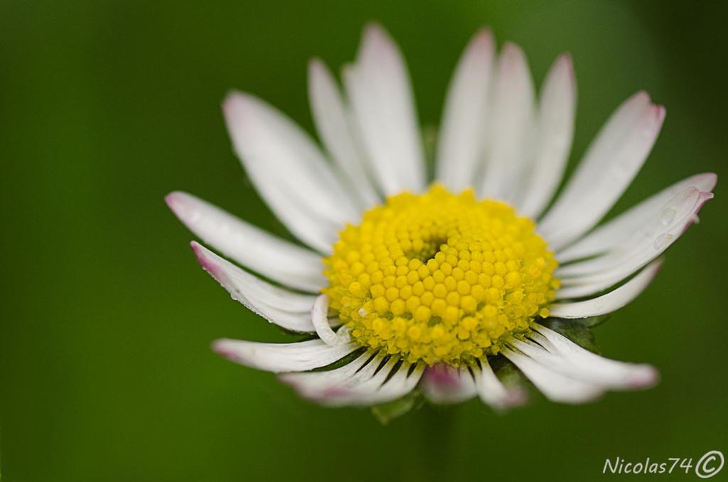 Daisy...