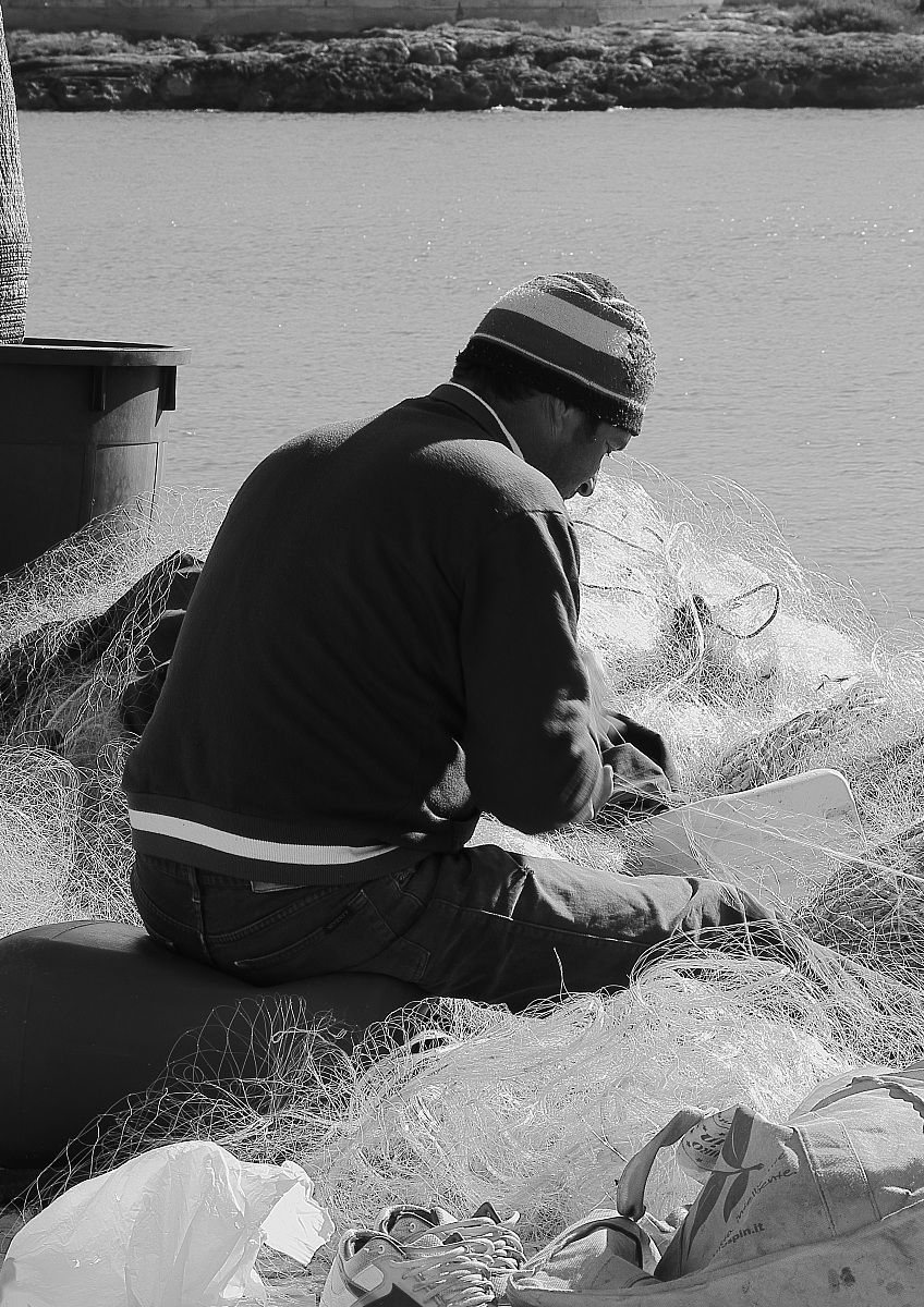 in the net of fish...