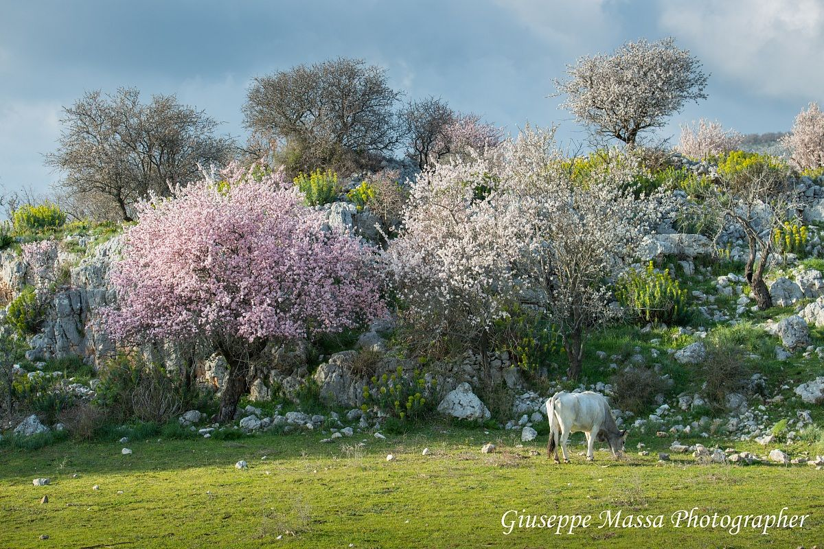 Spring bucolic - 2...