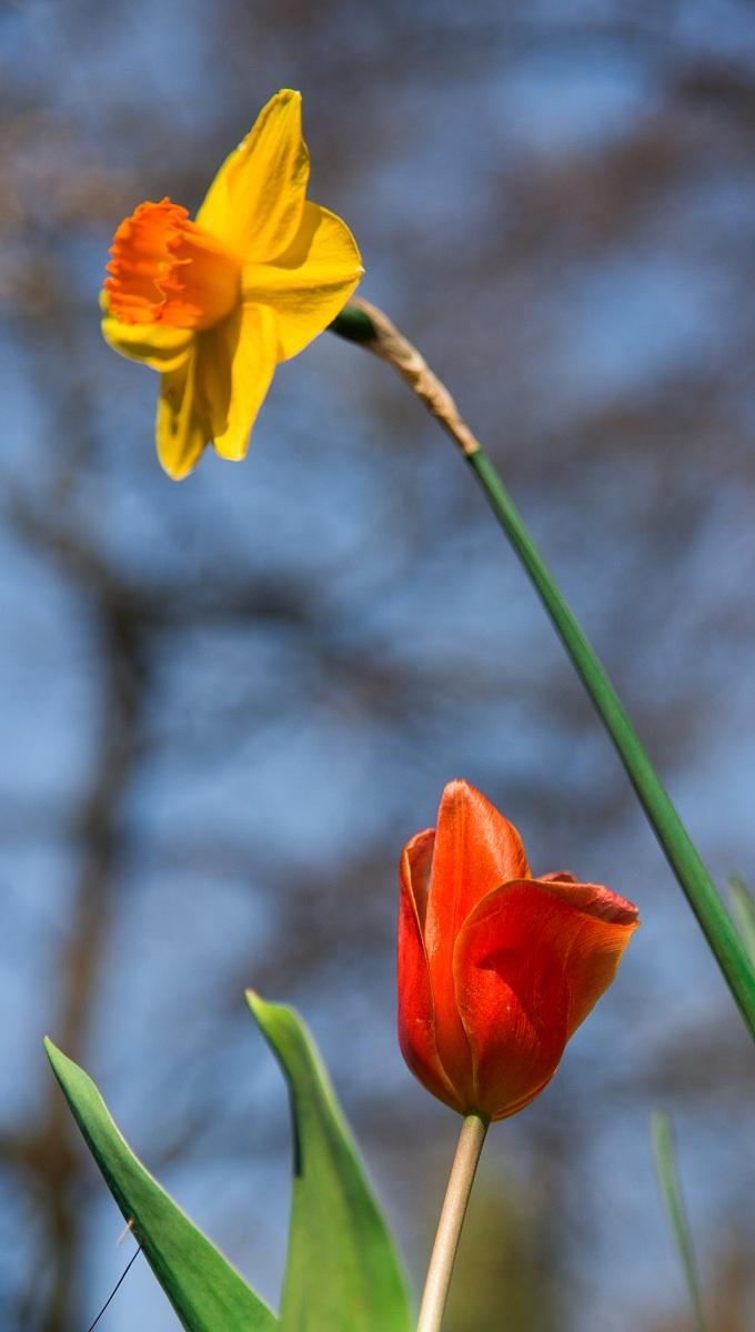 primi fiori al parco Sigurtà...