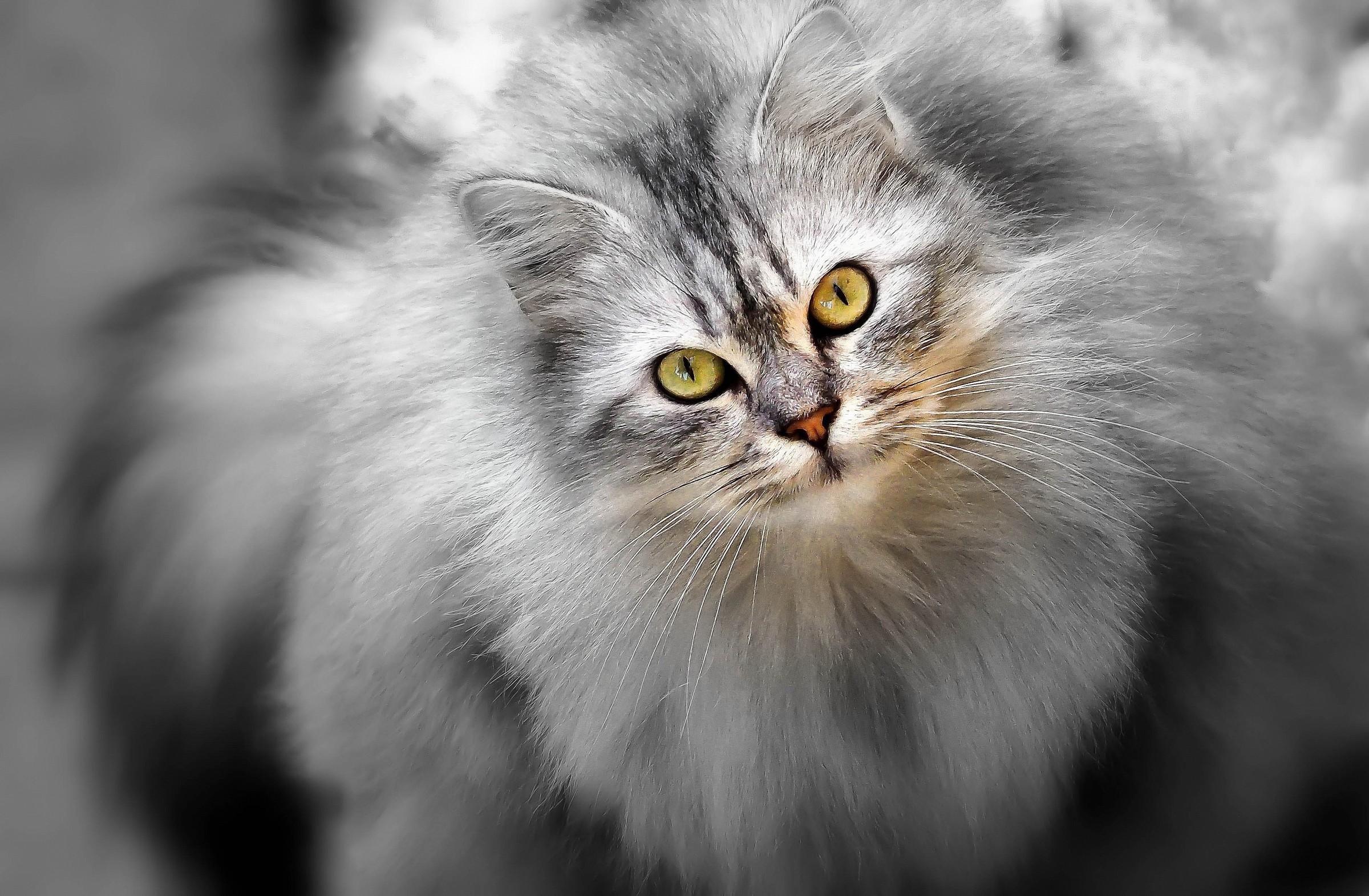Grey .....................
