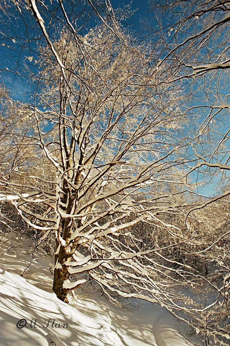 Neve fresca...