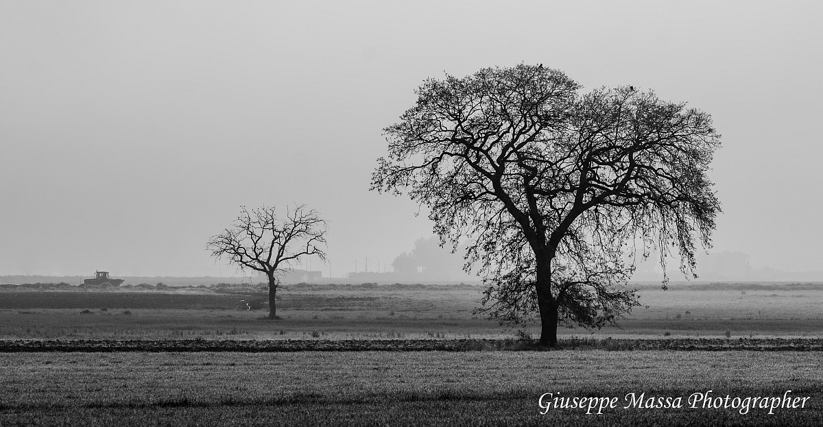 Agricultural landscape in the mist - silhouette overview...