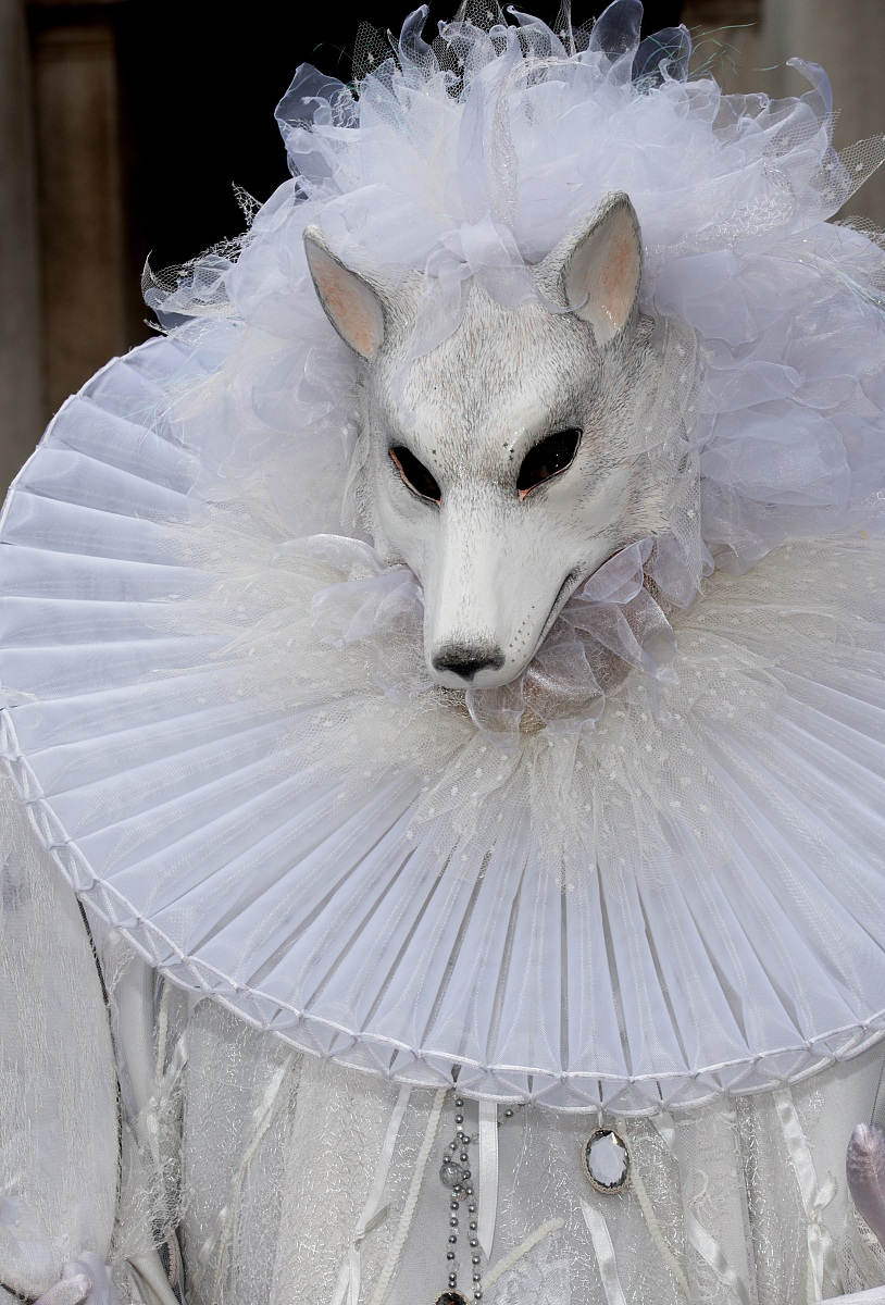 lupo bianco...