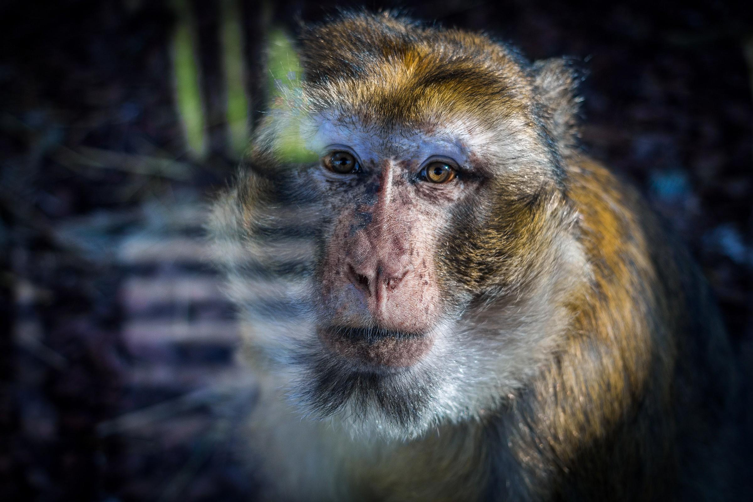 Barcelona Zoo...