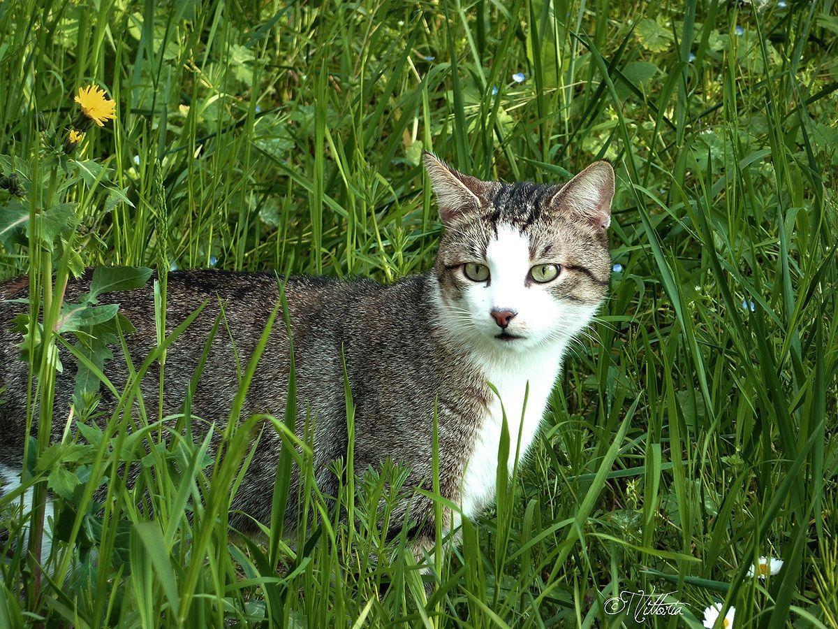 Feline look...