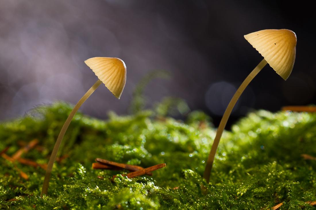 Small mushrooms...