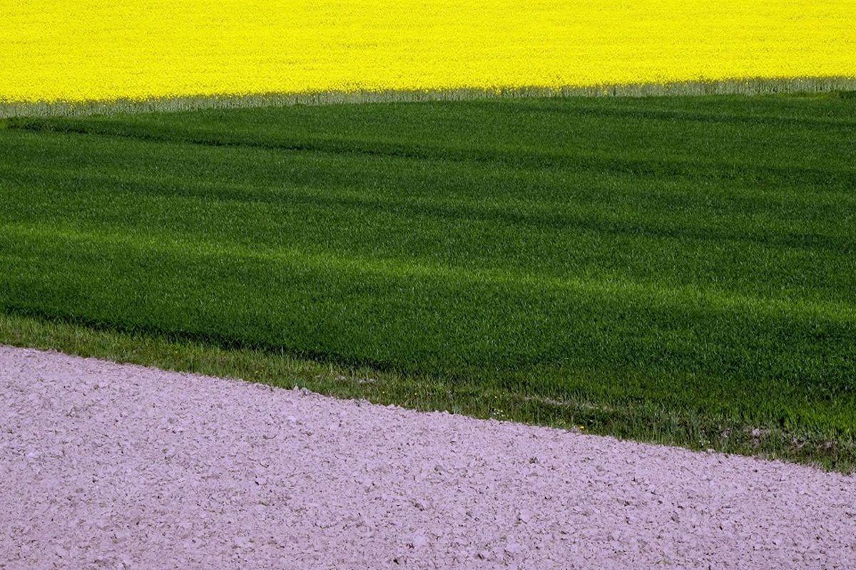Ground wheat and oilseed rape...