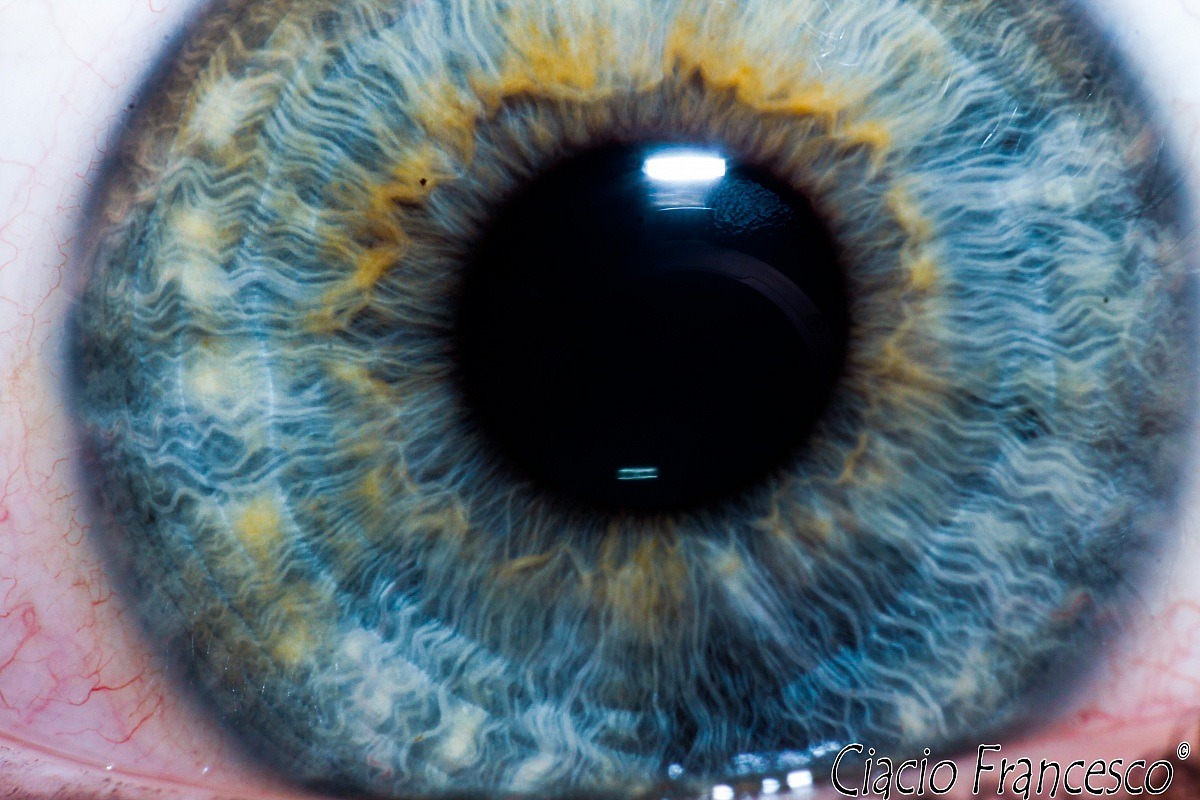 The eye of Laura...